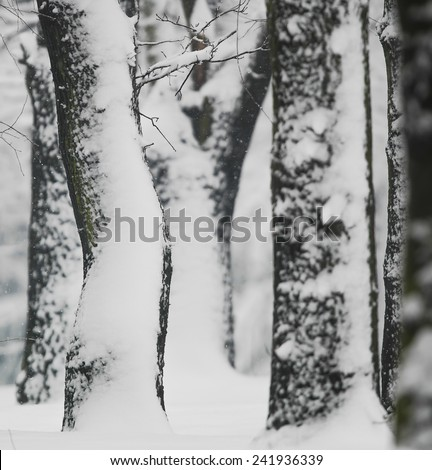 Forest at winter - stock photo