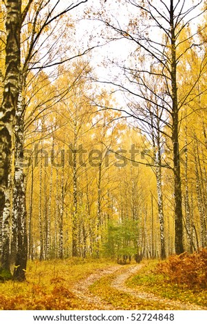 forest autumn closeup - stock photo