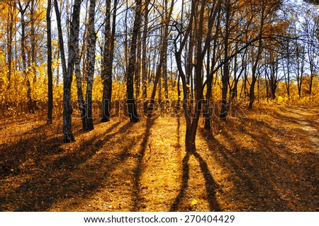 Forest autumn landscape. The shadow of the trees. - stock photo