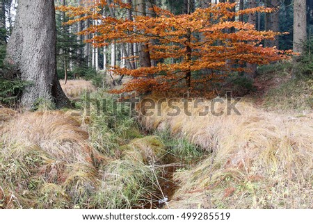 Forest autumn still life with the streamlet