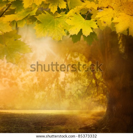 Forest background. Autumn design background with colorful green and yellow leaves falling from the tree - stock photo