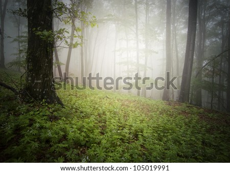 forest background with bright light