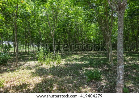 Forest, Beautiful Forest, Tropical Forest, Thailand Forest - stock photo