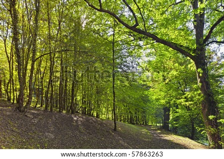 Forest beauty - stock photo