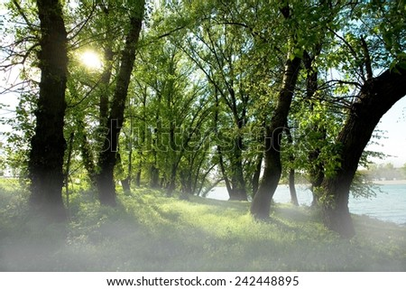 Forest behind the river - sunlight trought the trees