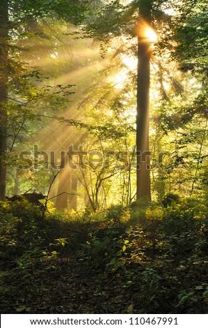 Forest. Bieszczadzki National Park. Poland. - stock photo