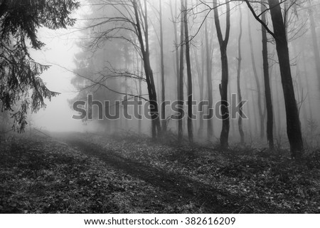 forest, black and white trees