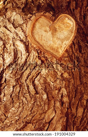 Forest brown wooden background. Texture forest wooden tree bark with sign of the heart. Love in nature - stock photo