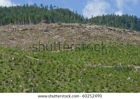 Forest clearcut showing freshly cleared areas, regenerating forest and uncut forest. - stock photo
