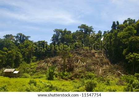 Forest cleared for agriculture in Palanan, Isabela, Philippines