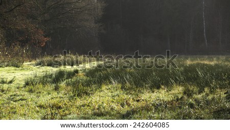 Forest clearing dominated by rushes in Northern Germany.