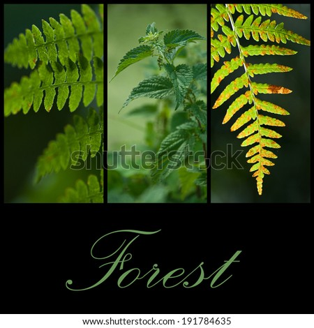 Forest collage  - stock photo