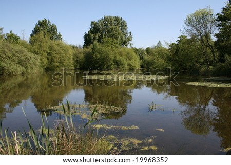 Forest Country Lake Reflections