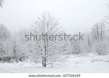 Forest covered in fresh show - stock photo