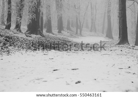 Forest covered with light snow, winter wonderland