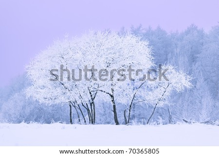 forest covered with snow - stock photo