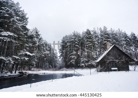 forest covered with snow. winter landscape - stock photo