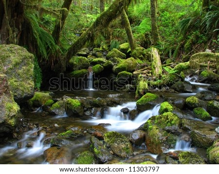 Forest Creek and Small Falls - stock photo