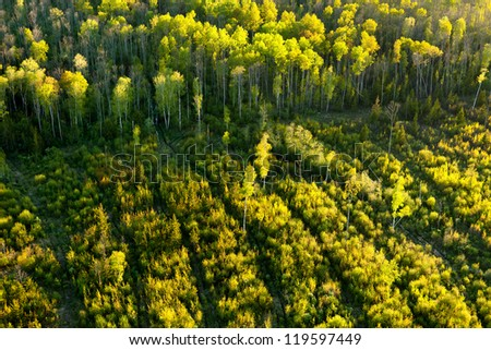 Forest cutting - stock photo