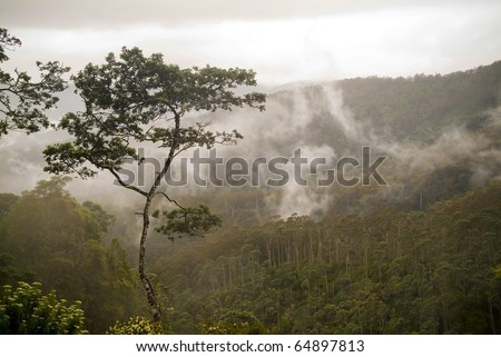 Forest details with fog and mist passing through - stock photo