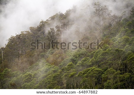 Forest details with fog and mist passing through