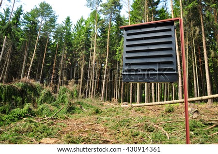 Forest ecology environment forestry - stock photo
