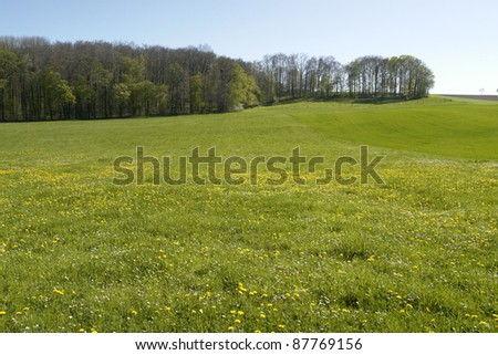 forest edge and yellow flowered meadow in Southern Germany at spring time