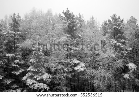 forest edge in winter day