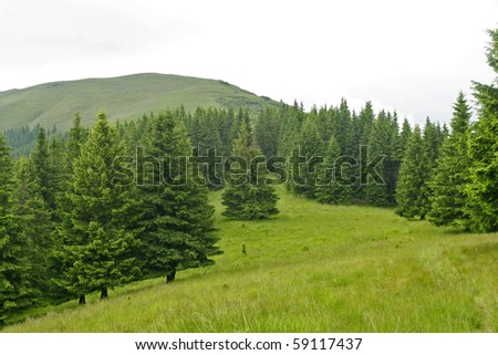 Forest edge seen from cleared alpine plateau - stock photo