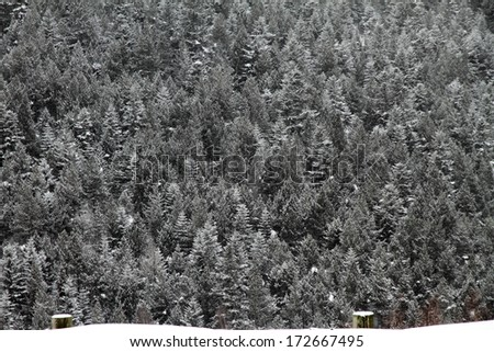 Forest, Famous ski center Soldeu city snow covered, Andorra,Pyrenees mountains