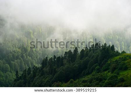 Forest. Fantastic forest. Forest landscape. Mountain forest. Wood forest. Dark forest. Foggy forest. Evergreen forest. Misty forest. Cloudy forest. Great forest. Sunny forest Great forest. Best forest - stock photo