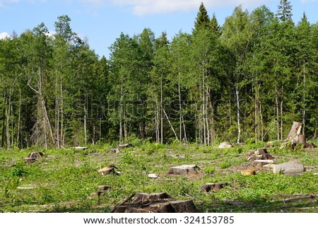 Forest felling. Forest glade with stump. - stock photo
