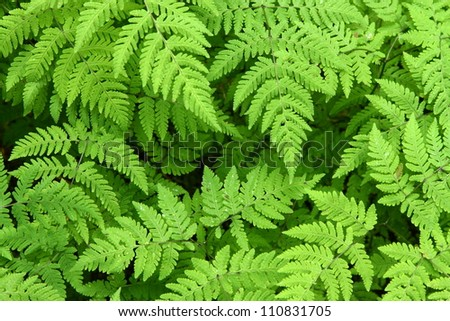 Forest fern leaves - stock photo