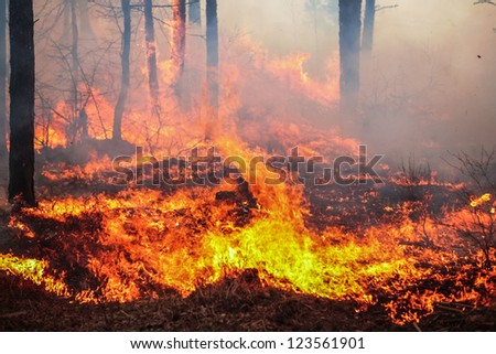 Forest fire - stock photo