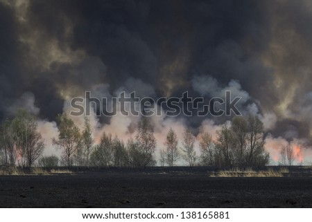 Forest Fire Burning - stock photo