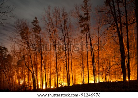 Forest Fire Burning at Night - stock photo