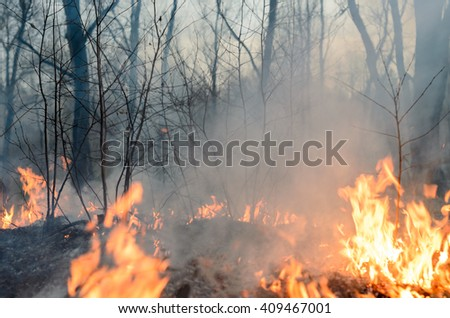 Forest fire, burning grass and small trees. - stock photo