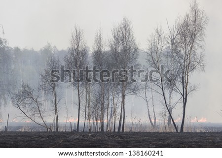 Forest Fire Flames - stock photo