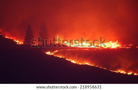 Forest Fire - flames light up the night as they rage thru pine forests and sage brush.  The Carlton Complex wild fire, Washington state's largest fire ever. Note the tree that is lit up like a torch!  - stock photo