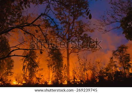 Forest fire in Thailand. - stock photo