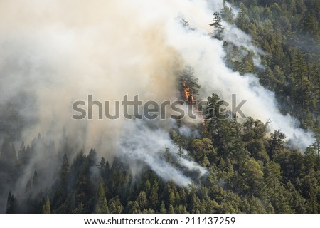 Forest fire, Mendocino forest, Northern California, 2014 - stock photo
