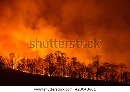 Forest Fire, Wildfire burning tree in red and orange color at night. - stock photo