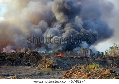 Forest fire with thick black smoke. - stock photo