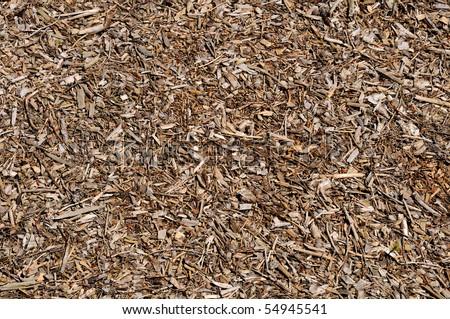 Forest floor - stock photo
