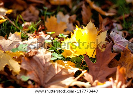 Forest floor covered with leaves in autumn