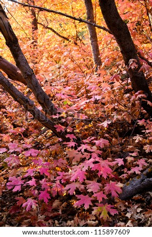 Forest Floor in the Fall Covered with Pink Leaves - stock photo