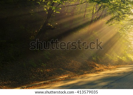 forest , fog and sun  in spring forest - stock photo
