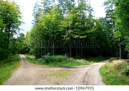 forest fork in the road - stock photo