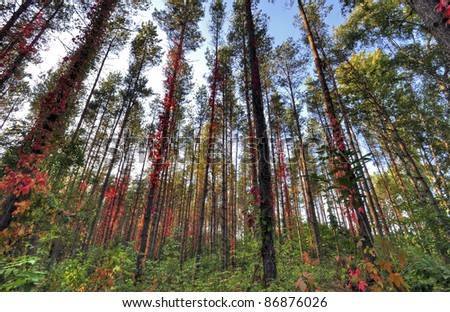 Forest full of colors - stock photo
