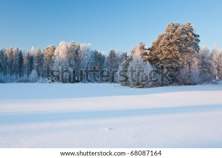 Forest full of snow - stock photo